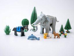 Állat és Növény